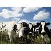 畜牧业追溯管理